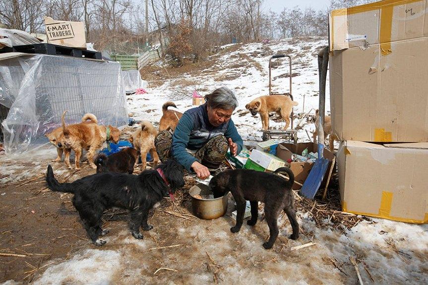 Donna coreana salva 200 cani